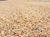Beach Made Of Shells