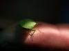 Bug Hunt 11