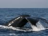 iSimangaliso - Whale Season 02