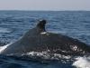 iSimangaliso - Whale Season 03