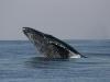 iSimangaliso - Whale Season 04