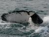 iSimangaliso - Whale Season - Curly