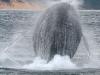 iSimangaliso - Whale Season - Jump