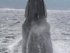 iSimangaliso - Whale Season - Standup