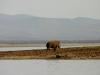 White Rhino - Lake Jozini 01