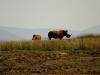 White Rhinos - Lake Jozini 02
