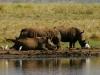White Rhinos - Lake Jozini 03