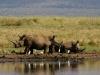 White Rhinos - Lake Jozini 05