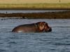 Hippo - Lake Jozini 09