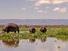 Lake Naivasha - Hippo 02