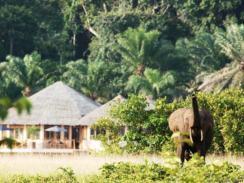 Loango Lodge with Elephant