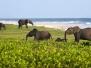 Loango National Park | Gabon