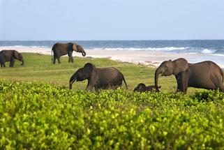 Loango National Park – Ndougou, Gabon - Atlas Obscura