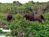 Forest Elephants 1