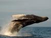 Loango National Park - whales