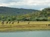 Giraffes and Rhinos