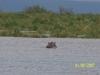 Mara River Airboat Safari Ted 01
