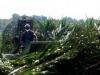 Phinizy Swamp 16
