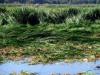 Phinizy Swamp 15