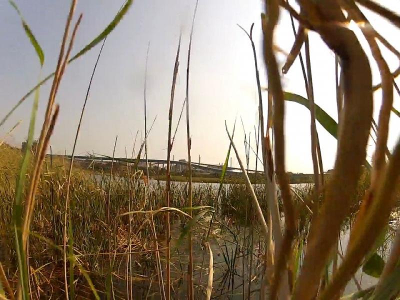 Running the reeds