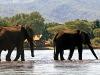 Chiawa Camp - 2 Elephants