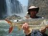 Zambezi - Tiger fish