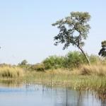 Okavango River & Delta