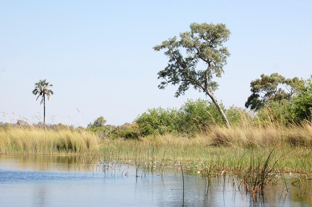 Okavango River - waterscape