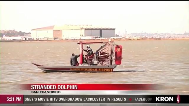 Dolphin port.mp4