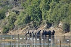 Boteti River | Botswana