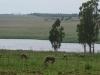 Highveld View at Bronkies