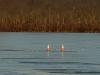 Budd Lake 6