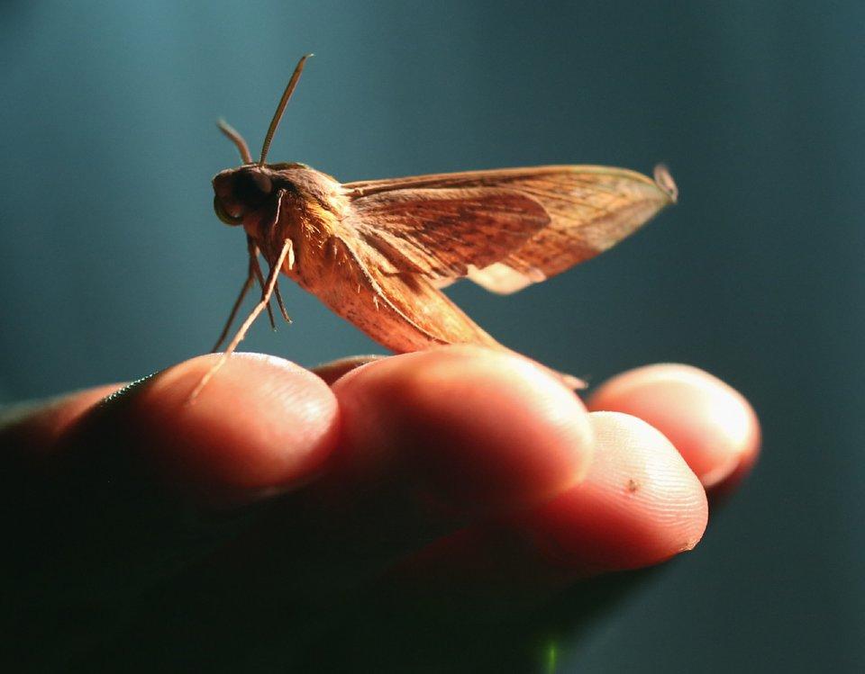Bug Hunt 06