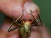Bug Hunt 07