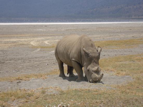 Lake Naivasha - Rhino