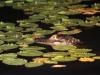 Lake Woodruff 10