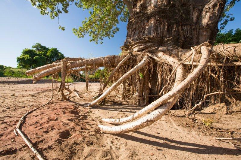 Malawi Flood 04.jpeg