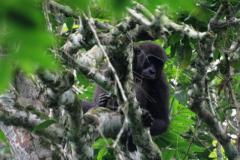 Odzala-Kokoua National Park | Congo